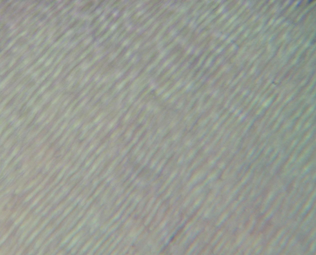 Рис. 5. Расположение базофильно окрашенных дентинных канальцев первой группы зубов (окраска гематоксилином и эозином, ув.?400).