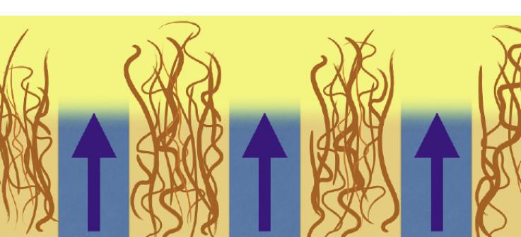 Рис. 10. Давление дентинной жидкости на гибридный слой (схема).