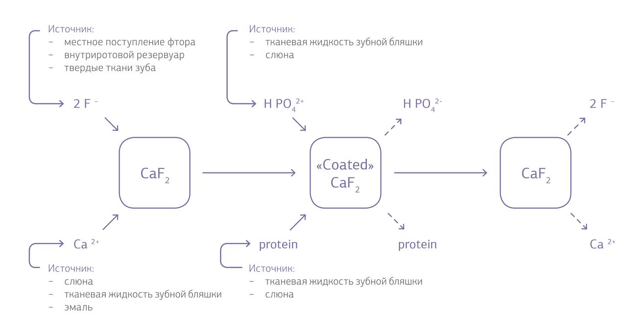 Рис. 1. Образование и распад подобного фториду кальция материала (в модификации по R?lla & Saxegaard, 1990).