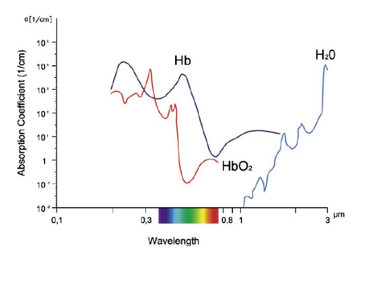 Рис. 3. Коэффициенты абсорбции тканей.