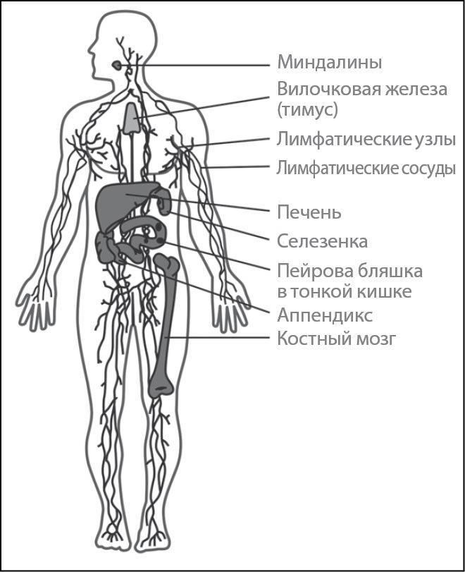 Рис. 3. Методика лазерной иммунокоррекции в ортодонтической стоматологии.